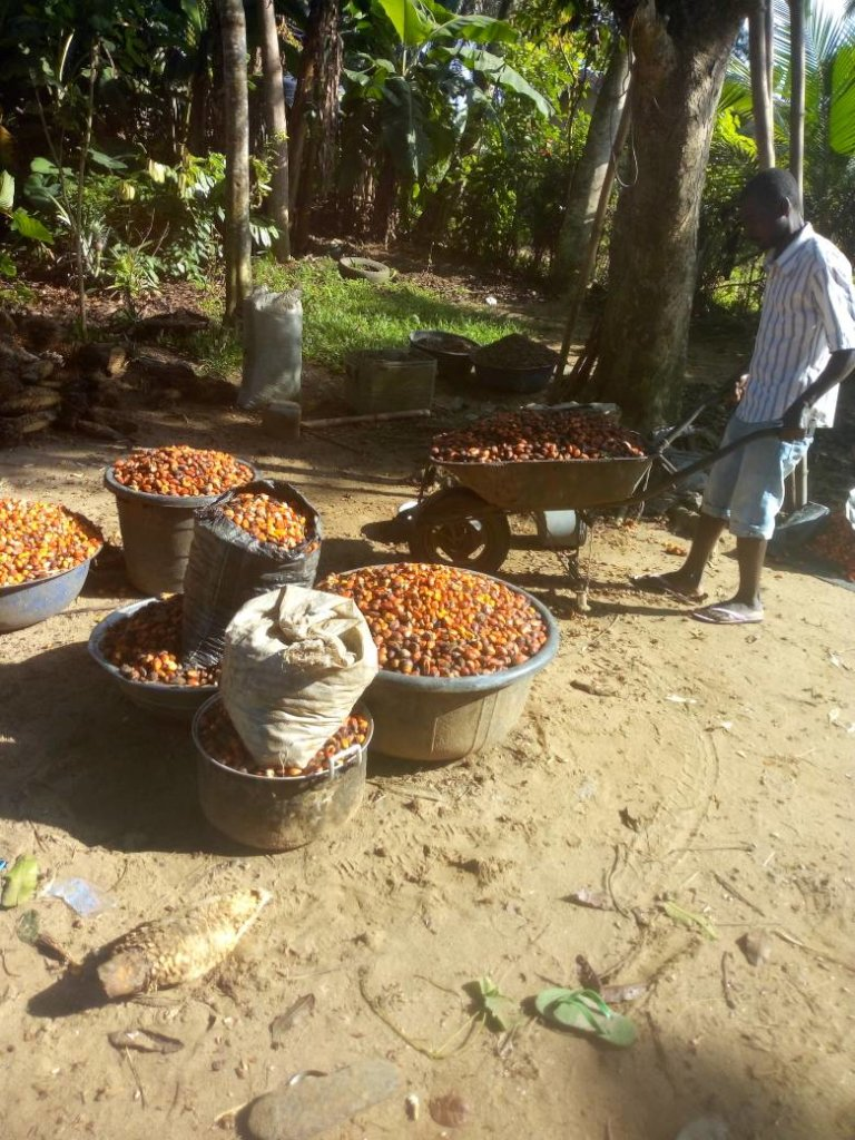 Help Build Processing Machines For 100 Uyo Farmers