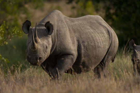 Saving Rhinos with Solar Energy