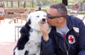 Training Service Dogs for Veterans!