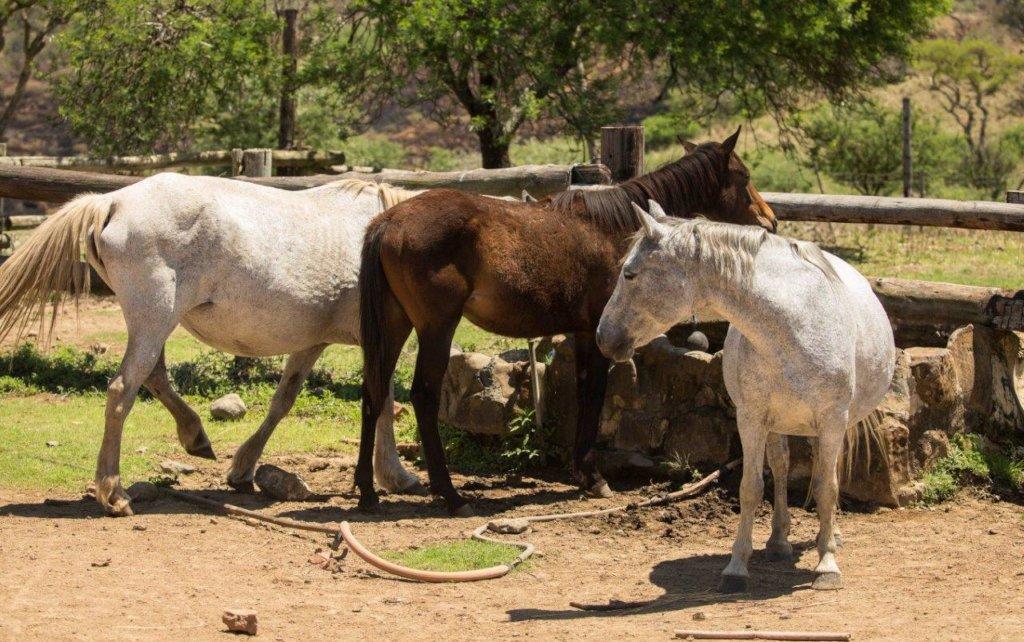 Horses at Spioenkop Reserve