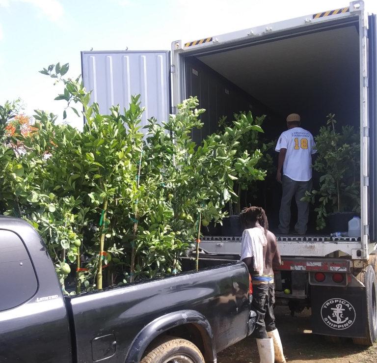 CFVI partner distributes fruit trees
