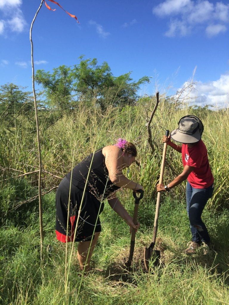 Tree planting at the coastal reserve