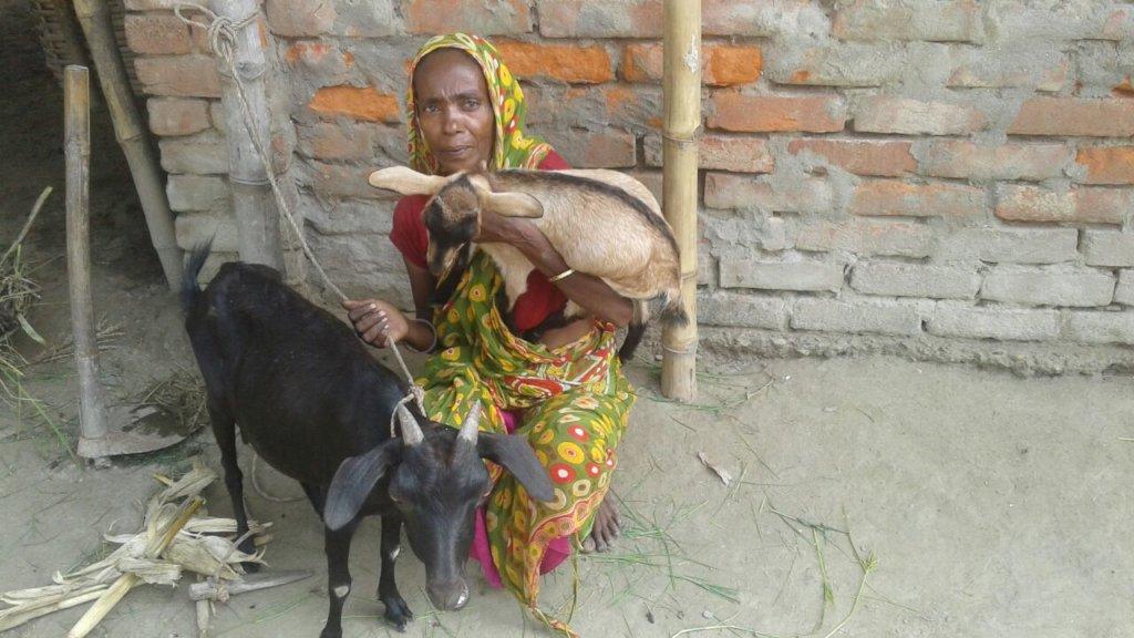 Goat for livelihood support for poor women
