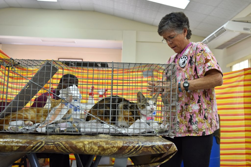 Vaccinate and Sterilize Cats and Dogs on Trinidad