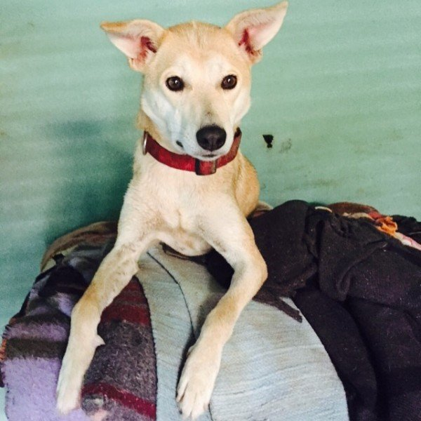 Help Get Asha to her Forever Home!