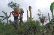 Tree Planting to Improve Biodiversity in Misamis
