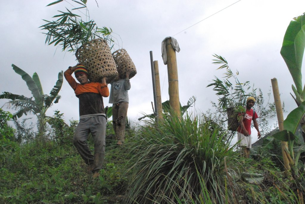project photo for Tree Planting to Improve Biodiversity in Misamis