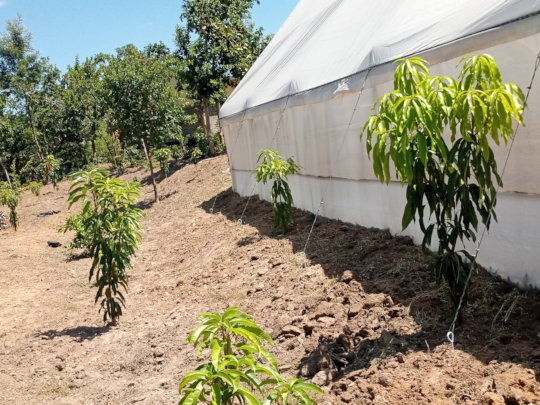 Fruit trees growing well