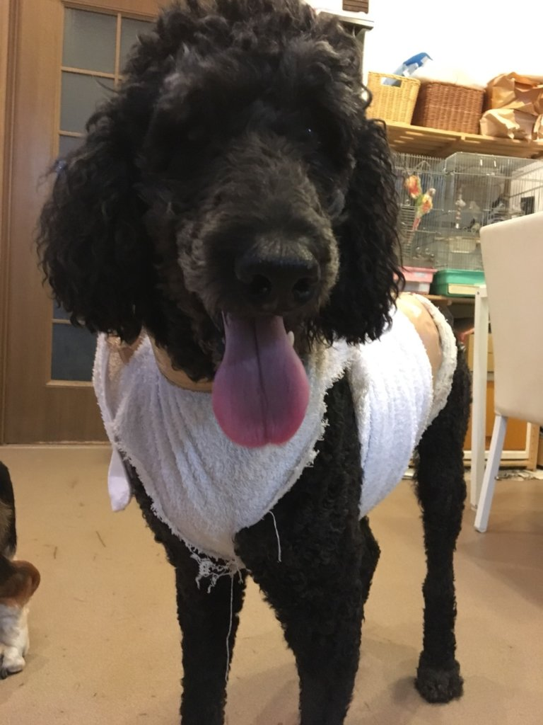 EMERGENCY! Surgery Fee for Therapy Dogs with Tumor