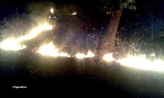 Forest Fires in Bandhavgarh