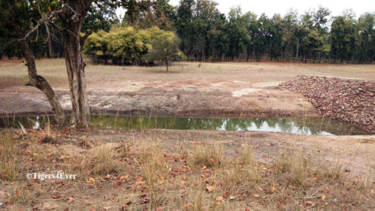 Tigers at Tigers4Ever funded new large Waterhole