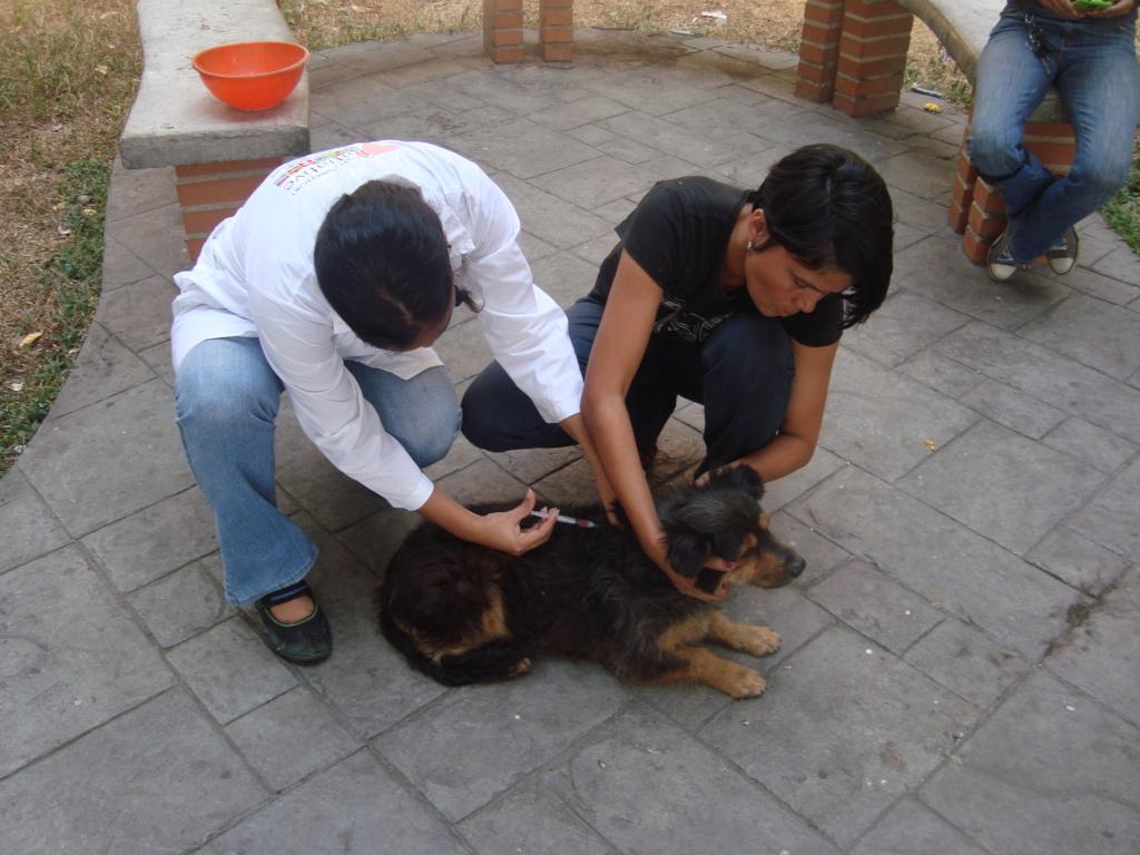 Help Abandoned Venezuelan Pets | Providing Food and Care