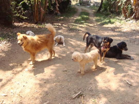 SAI Dog Shelter in Natural Habitat