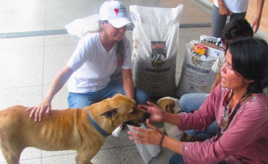 Staff & Volunteers give medical care to rescues.