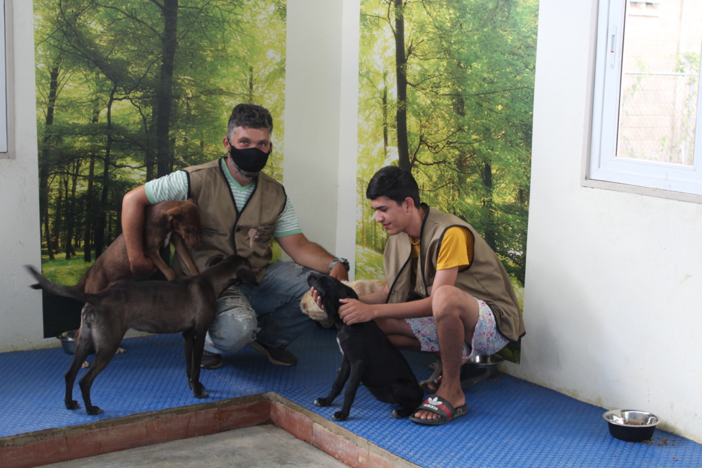 Rescued dogs get love & affection at SAI shelter
