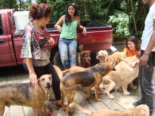 Rescued dogs enjoy free-time with SAI Volunteers
