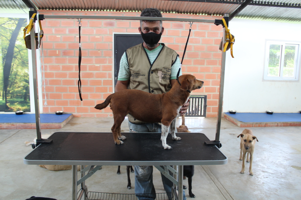 Rescued dog is being groomed