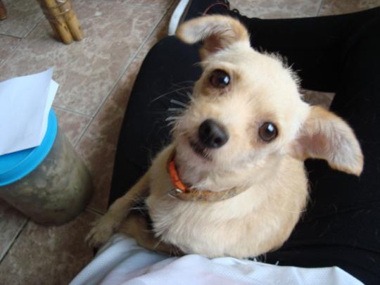 "Loving Shelter Dog Says, ""Please Adopt Me!"""