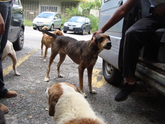 Starving Dogs Arrive at SAI Sponsored Shelter