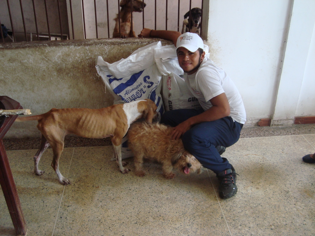Recently rescued starving dogs get food and love