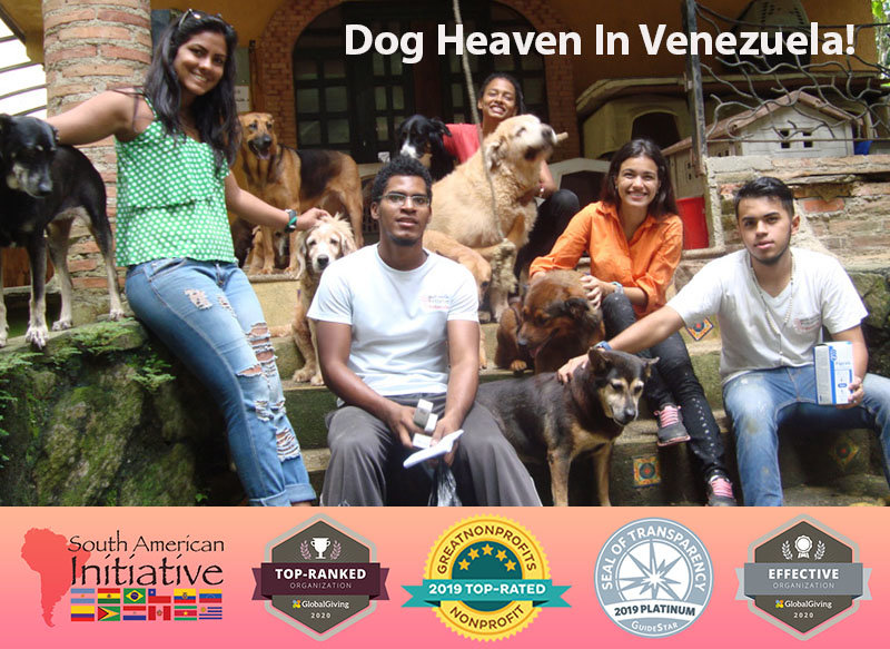 Venezuela | Helping Abandoned Pets