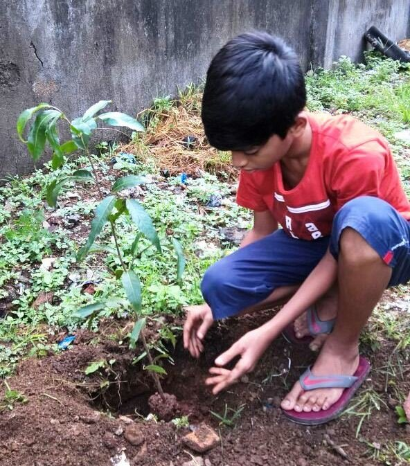 Plant a Tree : Source of Life