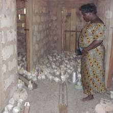 A participant in a poultry house.