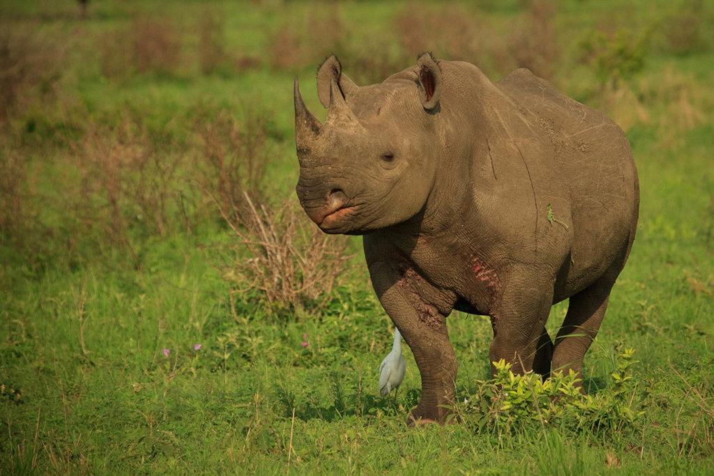 Project Rhino K9 Unit: Defending African Wildlife