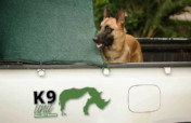 Project Rhino K9 Unit: Defending African Wildlife