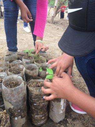 Transplanting baby trees