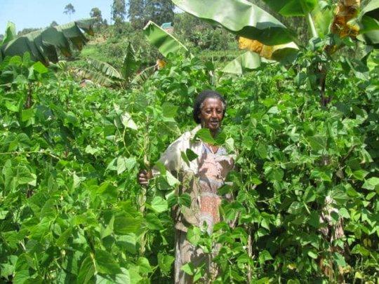 Margaret Harvests Beans from her Garden