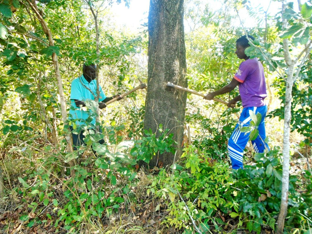 Enviro Conservation,Organic Farming and Beekeeping