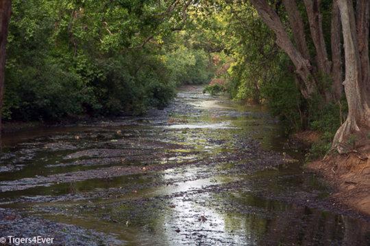 Monsoon Rains Replenish Streams & Rivers