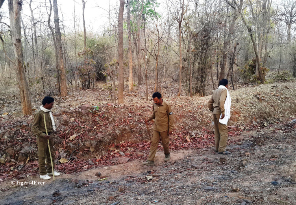 Protect Bandhavgarh's Tigers From Poachers 2019