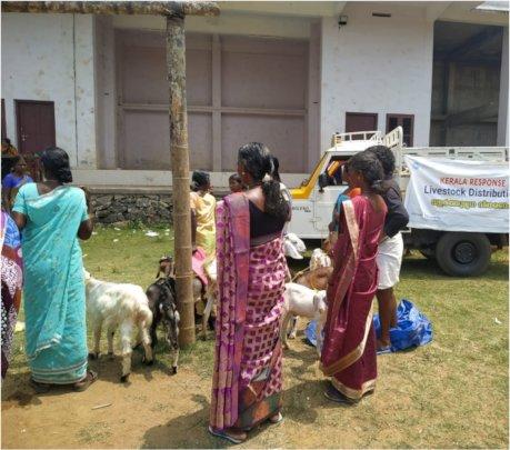 livestock distribution by Team IGSSS