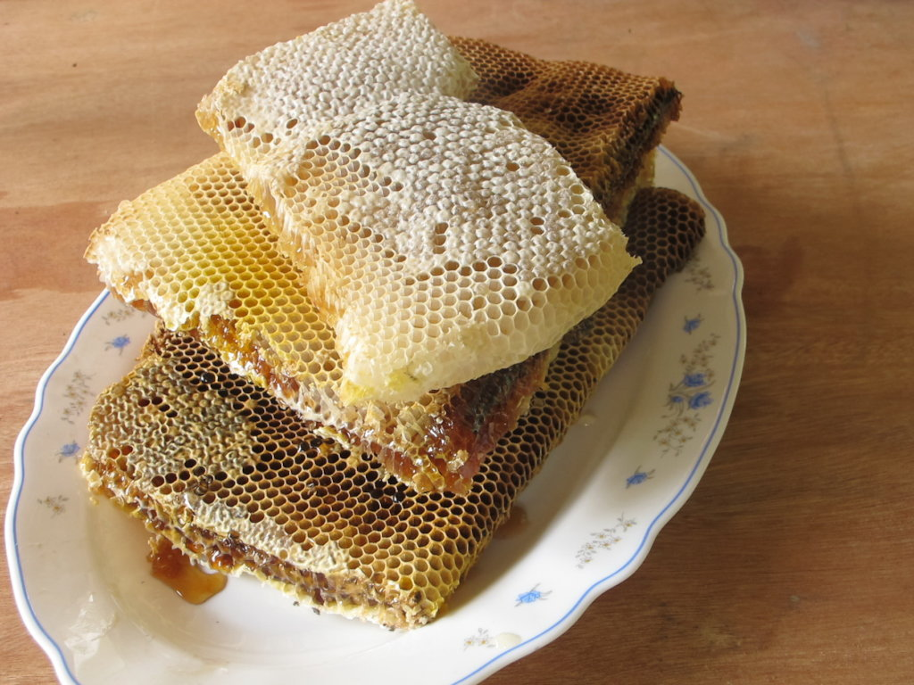 Harvesting honey saves forests and lives