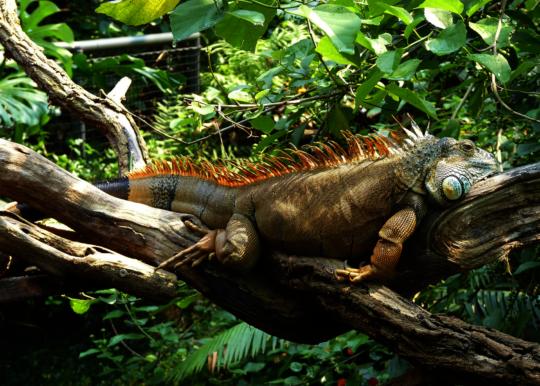 An ubiquitous invasive species