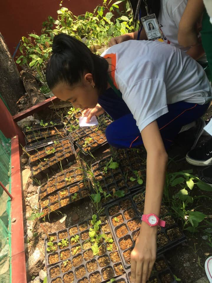 Working with seedlings.
