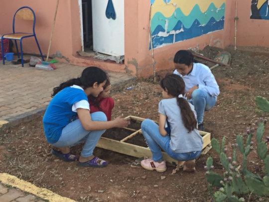 Starting seedlings for the garden