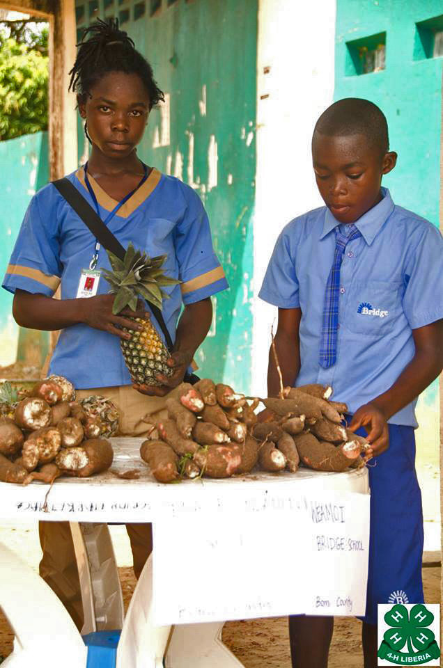 Student-grown pineapple and sweet potatoes