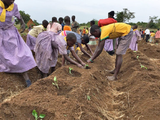 Students planting seedlings.