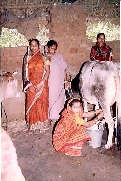 Sustainable livelihood for 200 families in Orissa