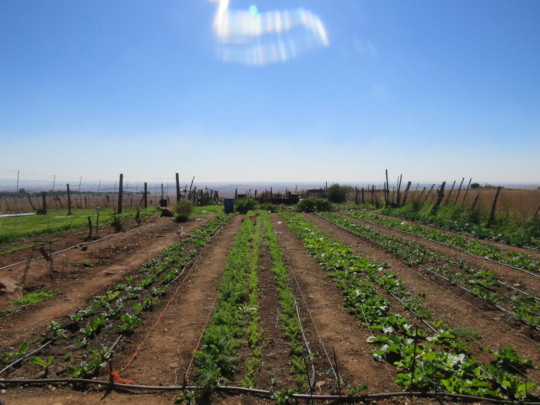 Paul's flourishing crops