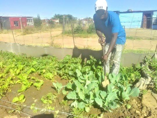 Mr Sibilwane tending to his garden