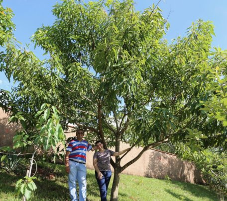 Mature fruit trees at a school in Mococa, Brazil