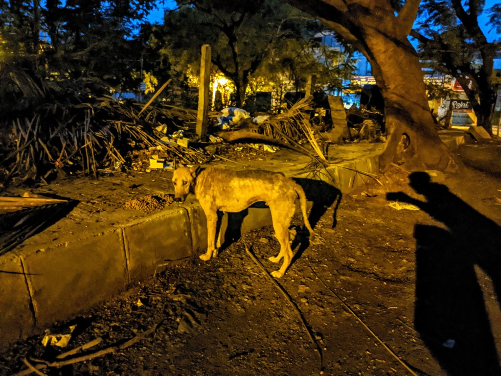 Provide Medical Care to Bangalore's Street Animals