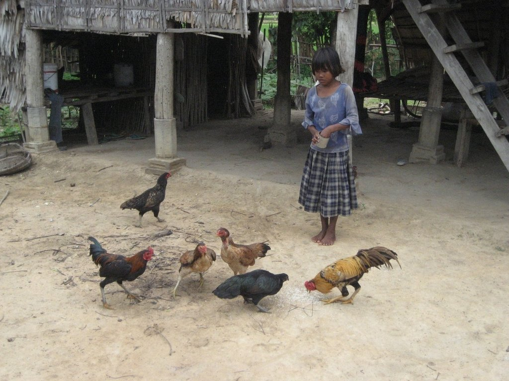 Homestead Food Production Program - Cambodia