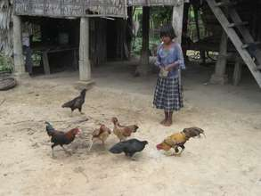 Girl feeds Chickens