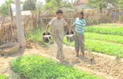 Homestead Food Production Program - Cambodia