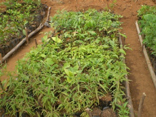 Training and seeds for reforestation in Cameroon